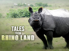 Tales from Rhino Land