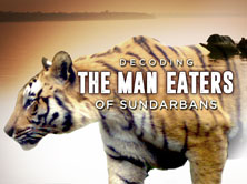Decoding the Man Eaters of Sundarbans