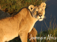 Journeys in Africa