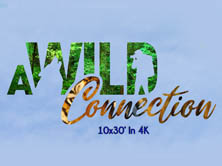 A Wild Connection