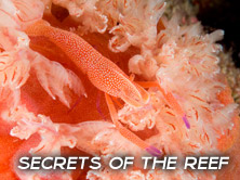 Secrets of the Reef